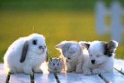 Animals Friendships Jigsaw