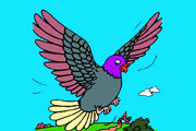Cute Pigeon Coloring