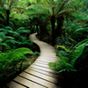 Beautiful Nature Jigsaw